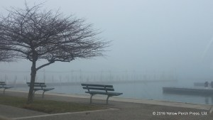 fog at Put in Bay