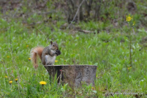 nature and wildlife on South Bass Island