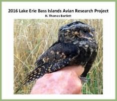 Birding Bass Islands