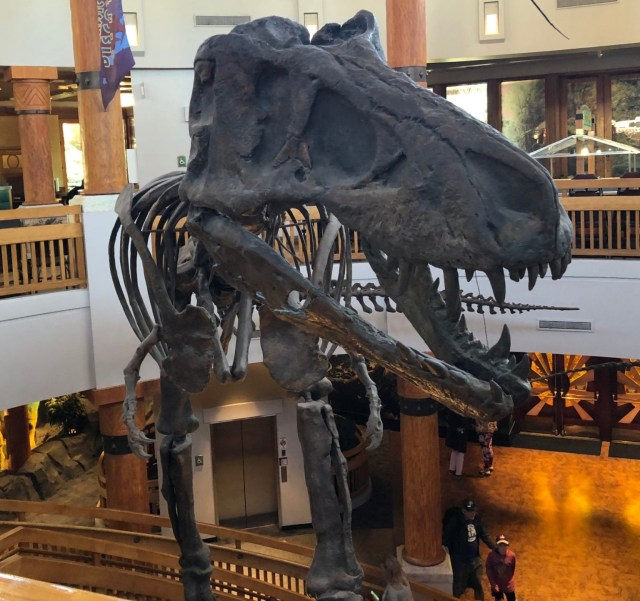 Jurassic Park Discovery Center T-Rex