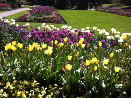 Tulips in Stanley Park