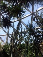 Inside the Bio-Dome