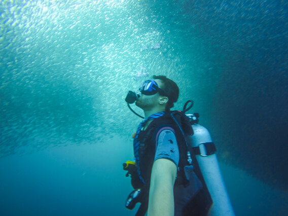 Diver looking at Sardine run in Molboal