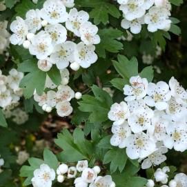 witte bloemetejs klompenpad meivakantie tips puur van geluk