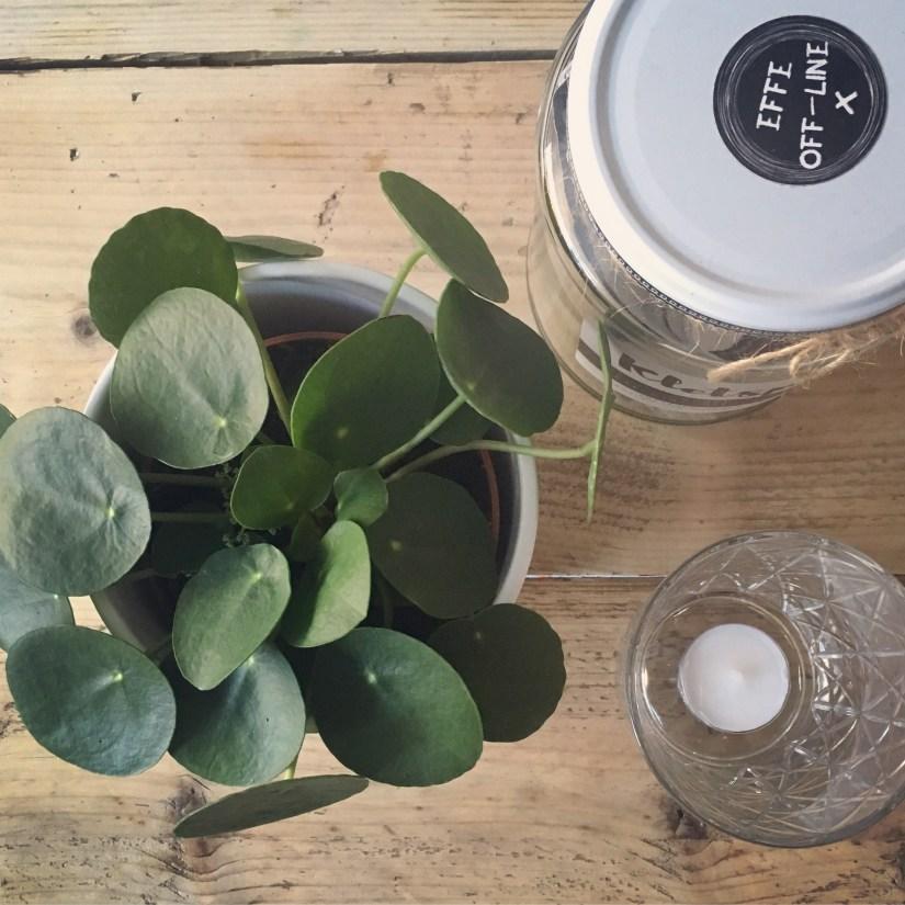 groen-geluk-planten-green-bubble-puurvangeluk