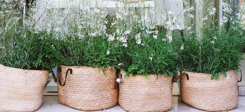 planten-bloemen-tuinontwerp-tuinaanleg-puurvangeluk