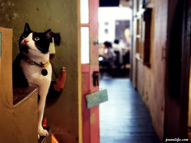 【小公寓 Apt. Cafe】文山區。木柵政治大學旁,老公寓寵物友善貓咪咖啡❤