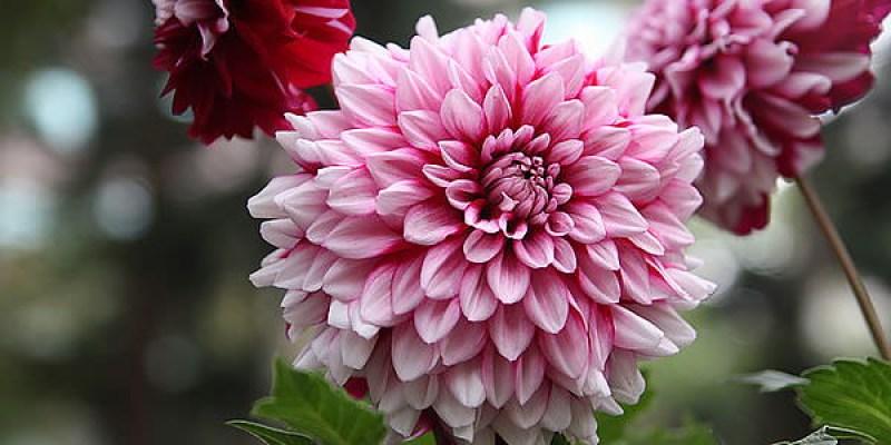 【台南景點】台南公園百花祭