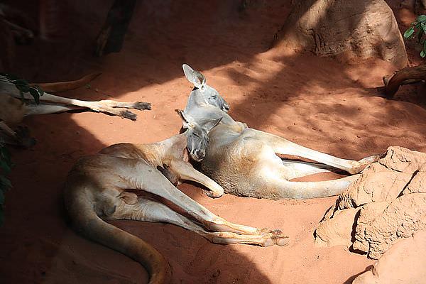 【東澳雪墨自由行】雪梨。水族館。野生動物園
