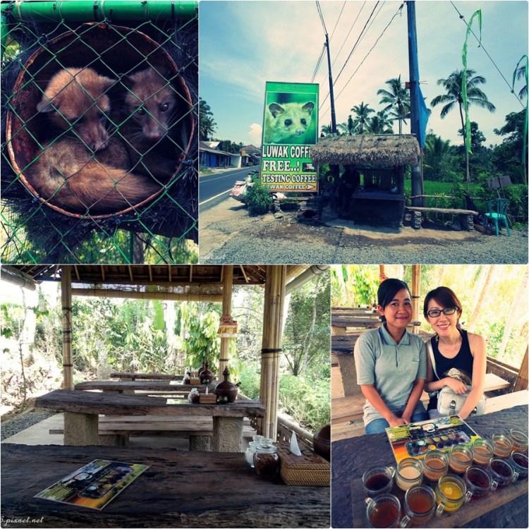 【峇里島度假去】烏布(Ubud)。品嚐世界最貴咖啡豆♥♥麝香貓咖啡(Alas Arum Coffe Luwak Tegallalang)♥♥
