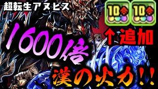 「10コンボ強化追加」1600倍!!  ついに自身も火力枠へ!! 超転生アヌビス【ダックス】【パズドラ実況】