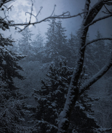 Dark and snowy woods, spirits in the woods