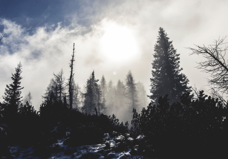 Spooky foggy forest in daytime