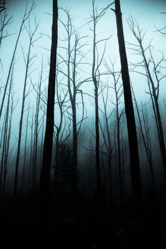 Take a walk through a creepy forest