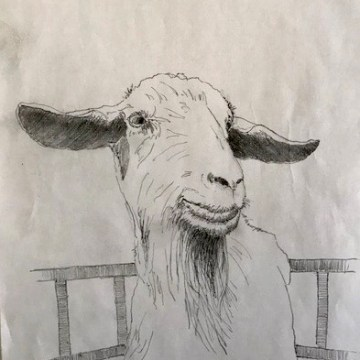 Goat by Scott Lindberg