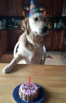 Birthday party treats for pets