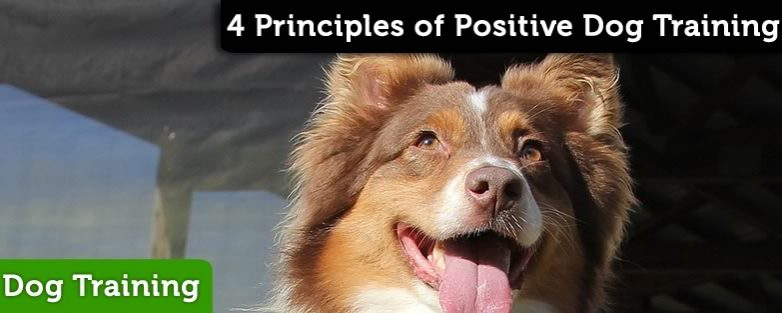 Four Principles of Positive Training