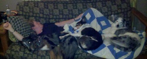 My Life as a Dog Pillow