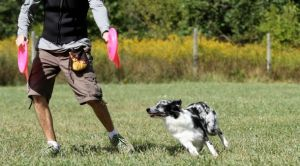 Disc Dog Flatwork with Groovy