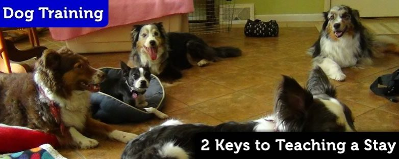 2 Keys to Teaching a Dog to Stay
