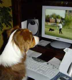 online dog training classes