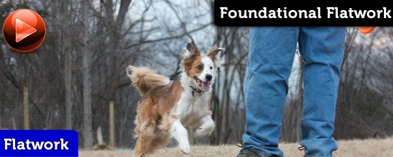 Disc Dog Flatwork Foundation