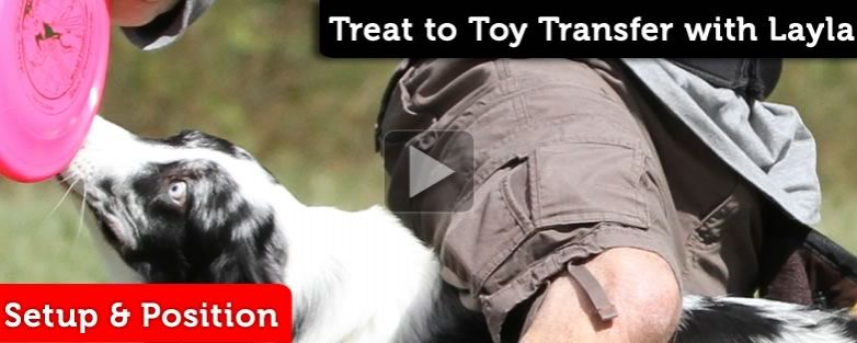 Treat to Toy Transfer with Layla