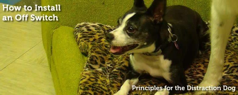 Principles for the Distraction Dog