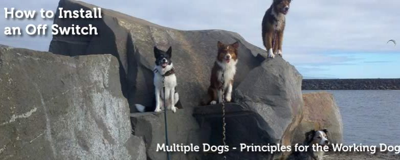 Working Multiple Dog | Principles for the Working Dog
