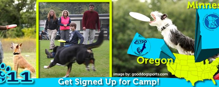 It's Tipped! PVybe Disc Dog Camps in MN and OR