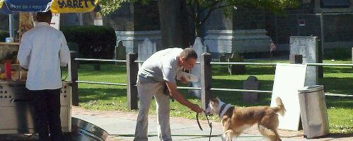 Uptown Dog Training