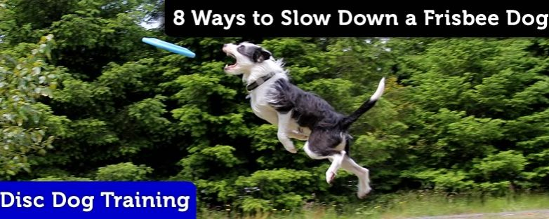 Eight Ways to Slow Down Your Disc Dog