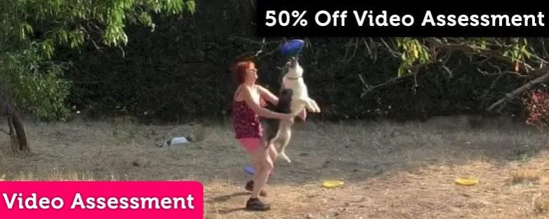 50% Off Dog Sport and Dog Training Video Assessments