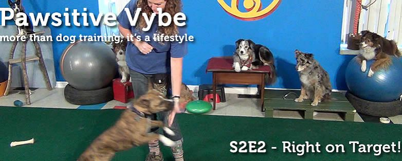 Pawsitive Vybe S2E2 – Right on Target!