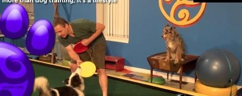 Pawsitive Vybe S2E9 – Bite for Drop