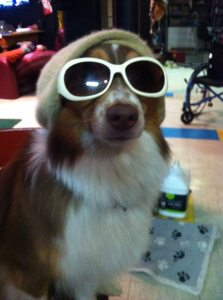 Cute Dog in Hat and Sunglasses