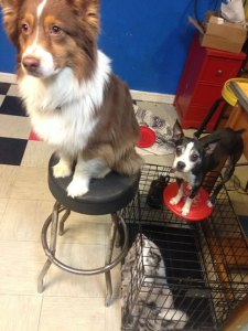 Dogs on Pedestals