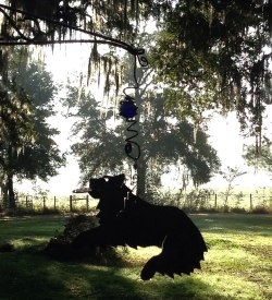 Hanging Disc Dog