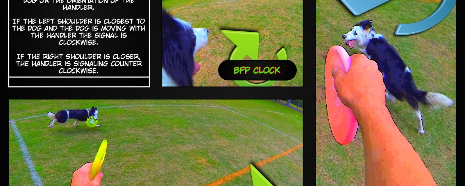 A Sample Lesson | Basic Disc Dog Positions: BSP and BFP