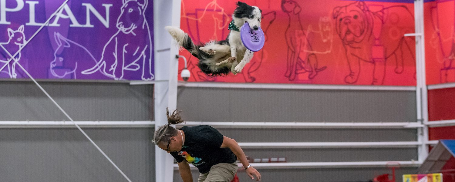 On Disc Dog Vaulting – How to Never Be Late Again