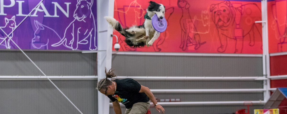 On Disc Dog Vaulting - How to Never Be Late Again