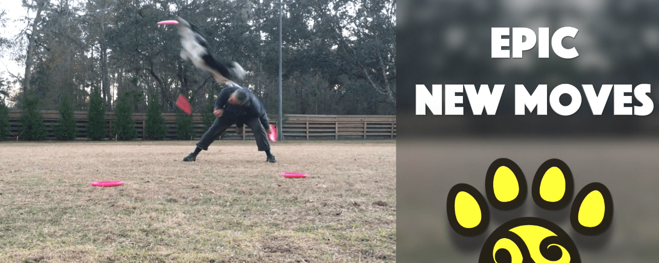 Totally Epic New Disc Dog Freestyle Moves