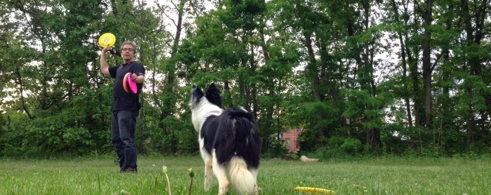 Wait vs Stay | A Critical Distinction in Dog Training and Dog Sports