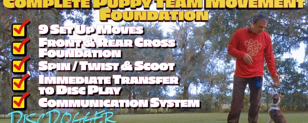Disc Dog Puppy Team Movement Foundation | 2nd Session