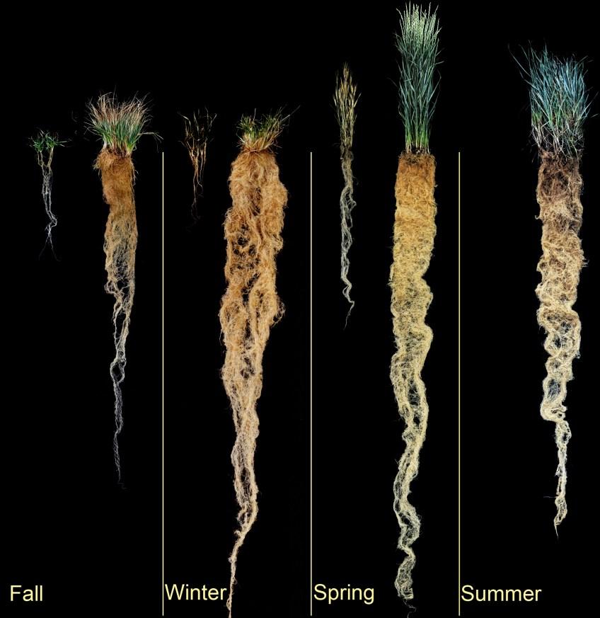 4 Seasons of Wheat