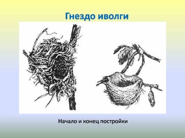Сезонные изменения в природе Весна Гнездование птиц