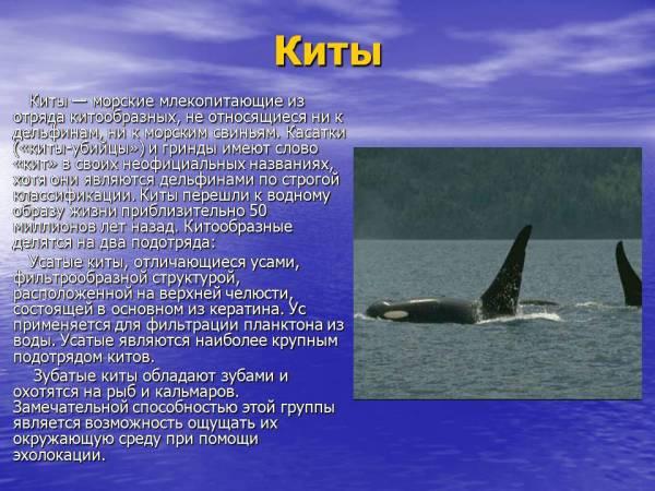 Животные и растения в мировом океане Презентации по экологии