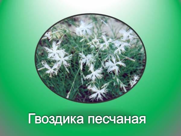 Растения красной книги - Презентации по биологии