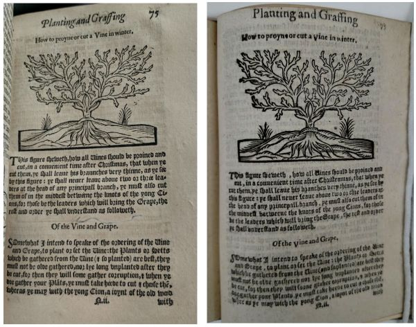 Comparing copied woodcuts