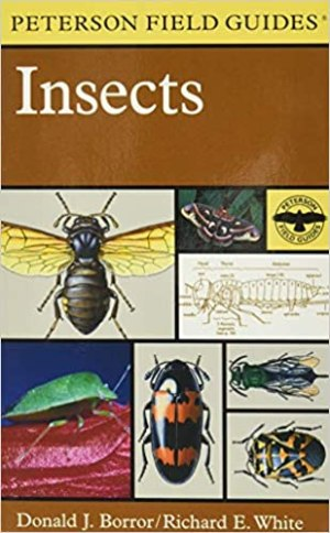 Peterson Field Guide to Insects: America North of Mexico